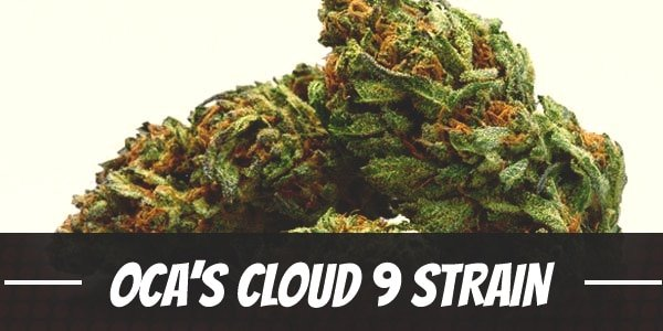 OCA's Cloud 9 Strain