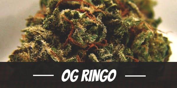 OG Ringo