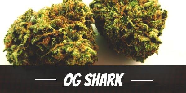 OG Shark