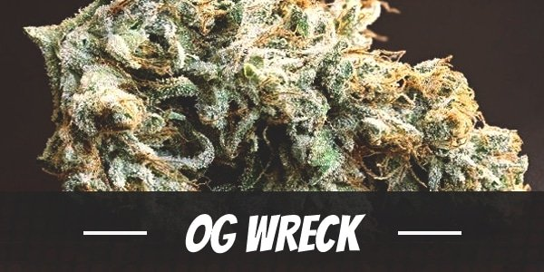 OG Wreck