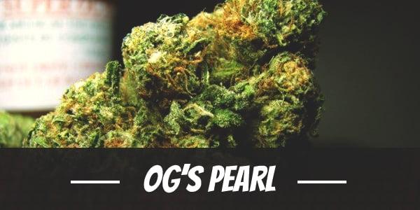 OG's Pearl