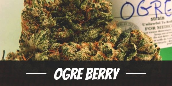 Ogre Berry
