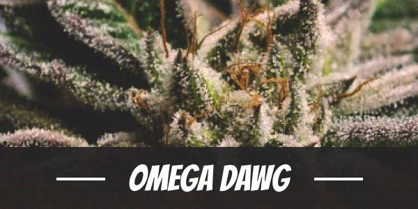 Omega Dawg
