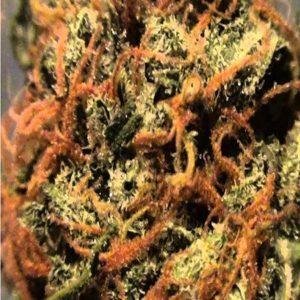 Orange Bud outdoor grow smoking effects