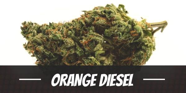 Orange Diesel