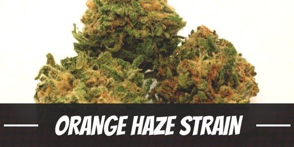 Orange Haze Strain