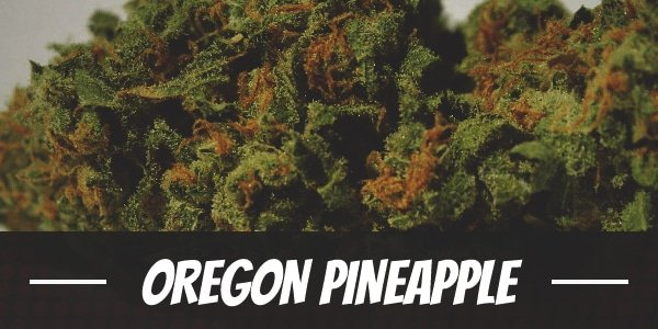 Oregon Pineapple