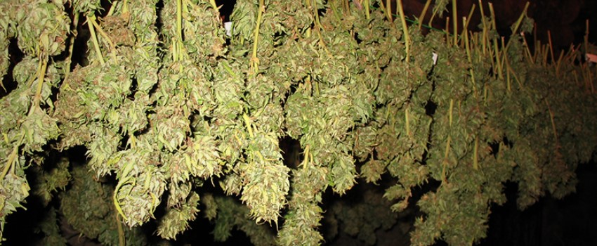 Other Air-drying methods for marijuana plants