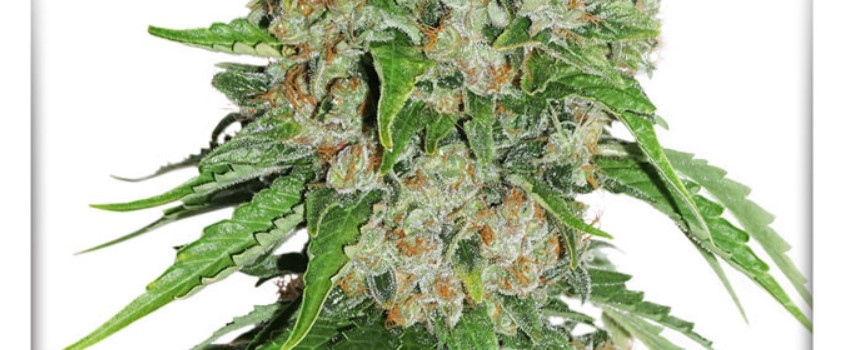 OutLaw Medical
