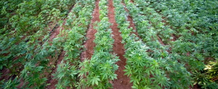 Outdoor Crop is the Most Affected