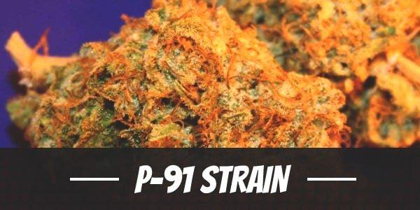 P-91 Strain