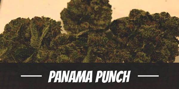 Panama Punch