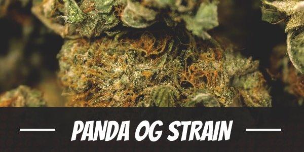 Panda OG Strain