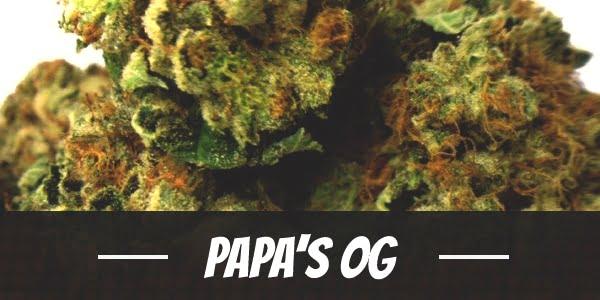 Papa's OG