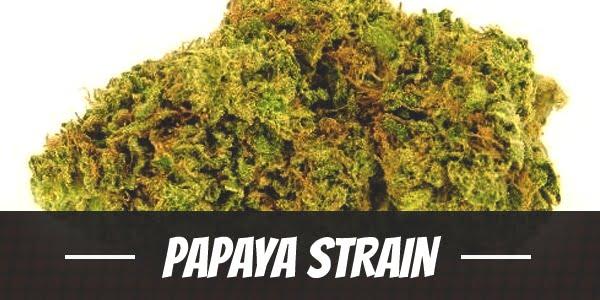 Papaya Strain