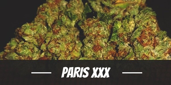 Paris XXX