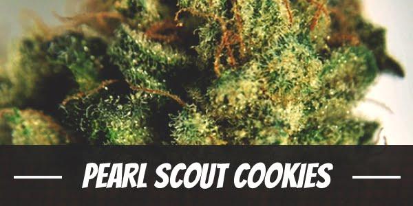 Pearl Scout Cookies