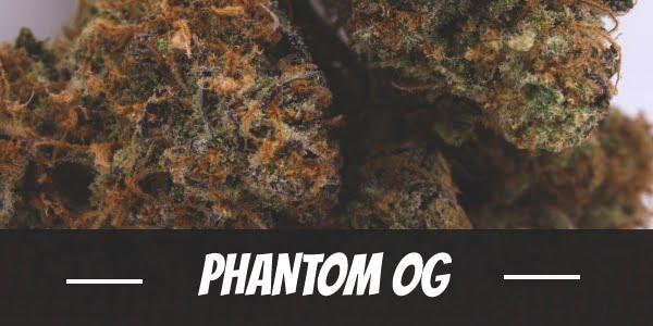 Phantom OG