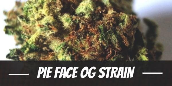 Pie Face OG Strain