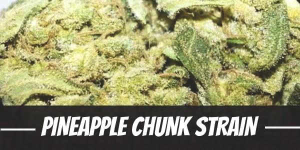 Pineapple Chunk Strain