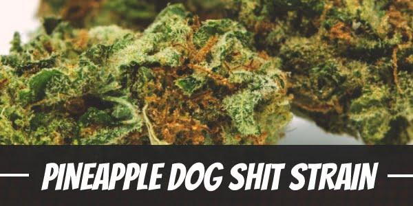 Pineapple Dog Shit Strain