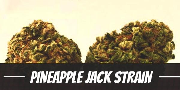 Pineapple Jack Strain