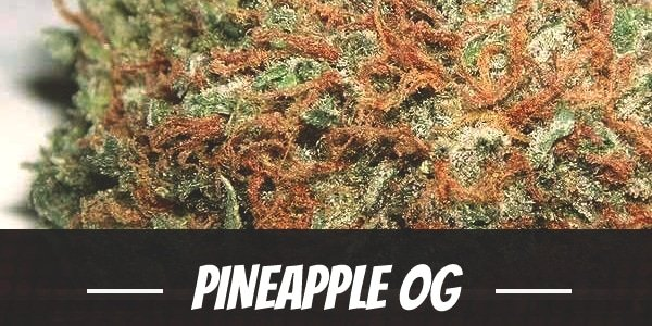 Pineapple OG