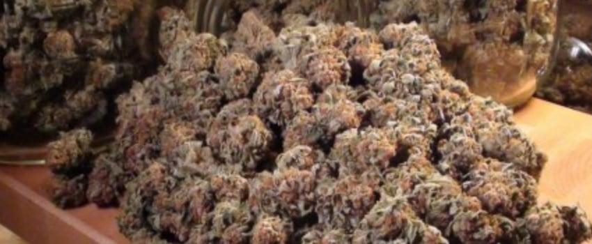 Pineapple Purple Skunk Effects