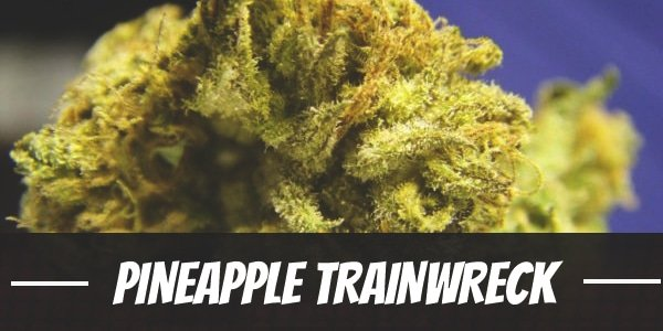 Pineapple Trainwreck