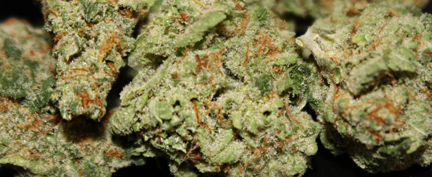 Pineapple_Medical