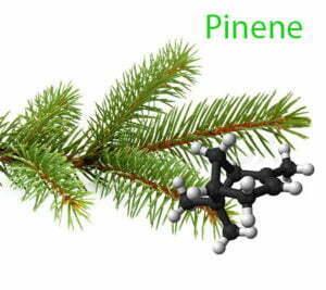 Pinene in cannabis