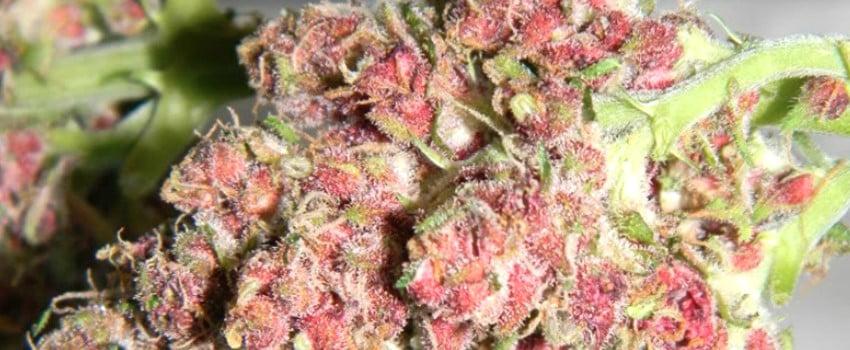 Pink Mango Medical