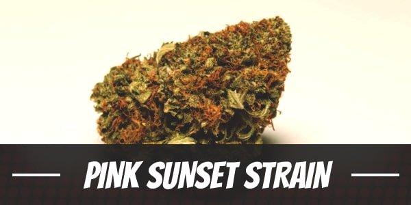 Pink Sunset Strain