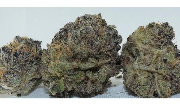 Platinum Girl Scout Cookies Strain Effects