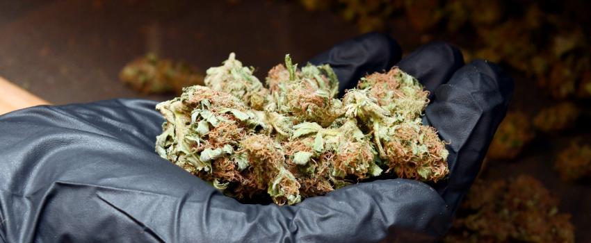 PossessingMarijuana
