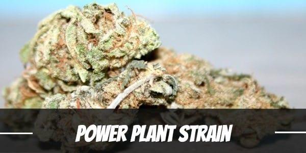 Power Plant Strain