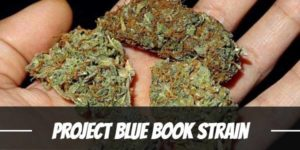 Project Blue Book Strain