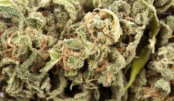 Project Blue Book Strain Medical