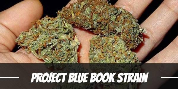 Project Blue Book Strain