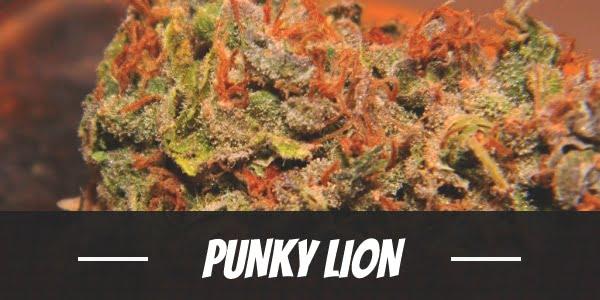 Punky Lion