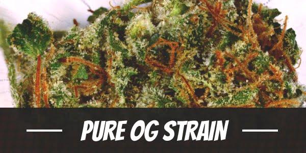 Pure OG Strain