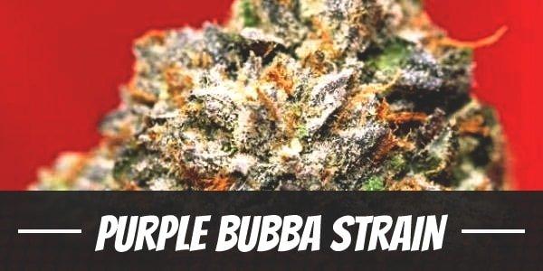 Purple Bubba Strain