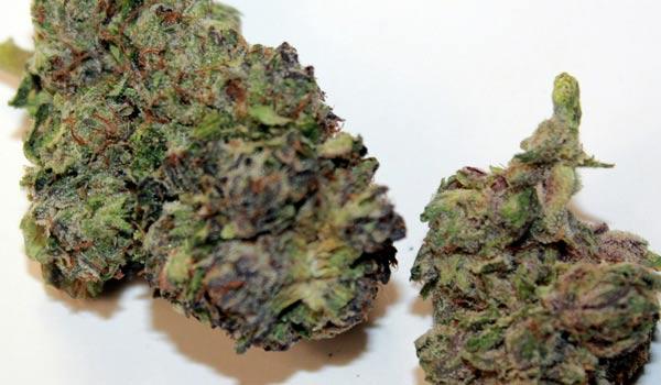 Purple Bubba Strain Effects