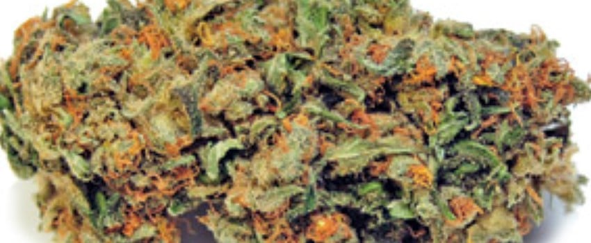 Purple Chemdawg Adverse Reaction