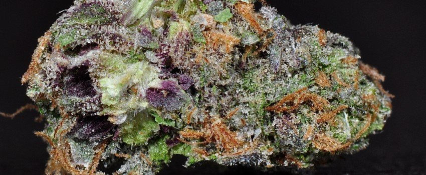 Purple Chemdawg Effects