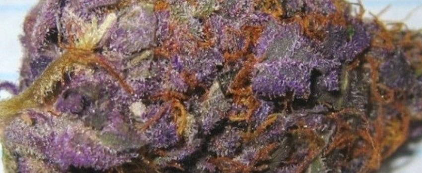 Purple Cow Medical