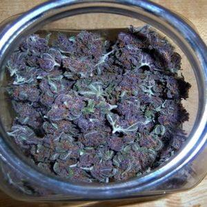 Purple Haze ourdoor grow medicinal use