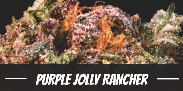 Purple Jolly Rancher