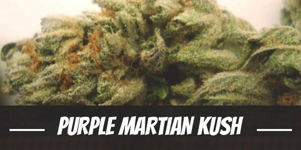 Purple Martian Kush