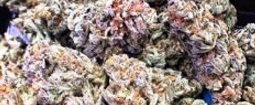 Purple Martian Kush Effects